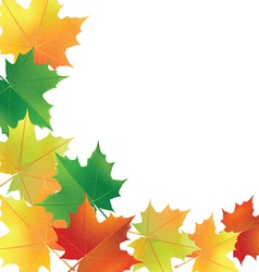 autumn leaves on the white background vector image