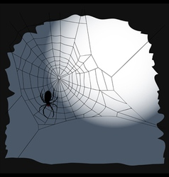 Halloween background Spider on a cobweb vector