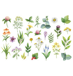 Hand drawn watercolor set herbs and vector
