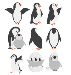 Happy penguin and chicks characters in different vector