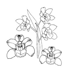 orchids by hand drawing liner vector image