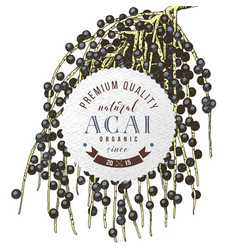 Round emblem with hand drawn acai palm branch vector