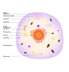 animal cell vector image vector image
