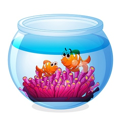 An aquarium with two orange fishes vector image