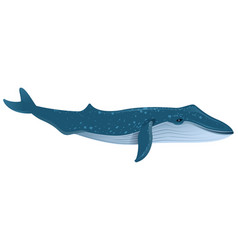 Blue whale is largest marine mammal vector