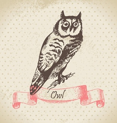 Owl bird hand-drawn vector image
