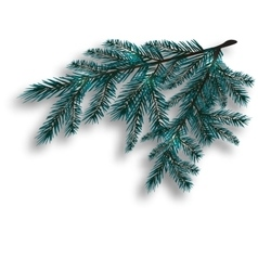 Two blue realistic tree branch Spruce branches vector