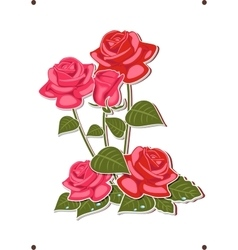 a bouquet of red and pink roses vector image