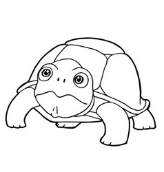 cartoon cute turtle coloring page vector image vector image