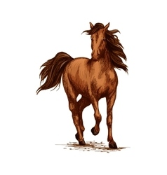 Brown horse running gallop on races sketch vector