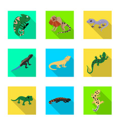 Design tail and fauna logo set tail vector