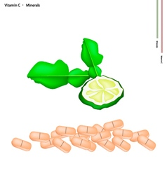 Fresh Kaffir Limes with Vitamin C and Minerals vector image