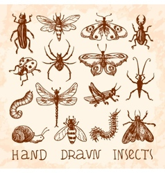 Insects sketch set vector image