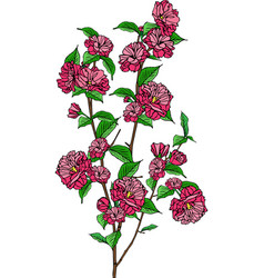 branch of blooming sakura with pink flowers vector image