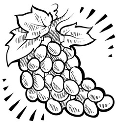 doodle grapes vector image