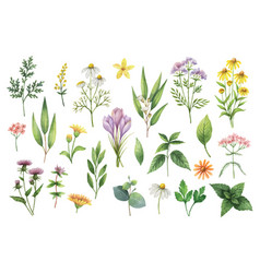 Hand drawn watercolor set herbs and vector