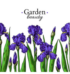 Iris flower and leaves border drawing hand vector