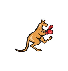 Kangaroo Kick Boxer Boxing Cartoon vector image