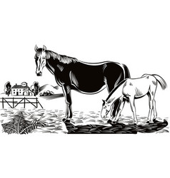 mare with her foal vector image vector image
