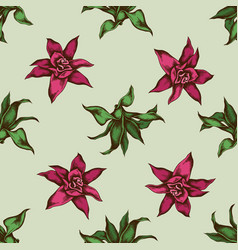 seamless pattern with hand drawn colored guzmania vector image