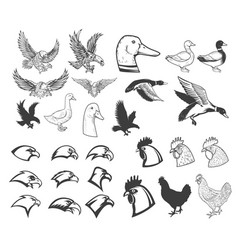 Set of birds eagle duck goose chicken design vector