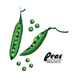 cartoon peas ripe green vegetable vegetarian vector image vector image