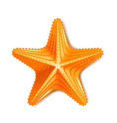 starfish isolated on white vector image
