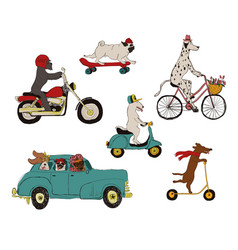Collection dogs driving vehicles vector