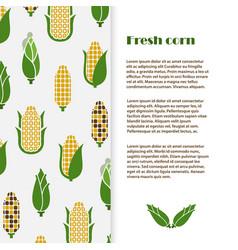 Fresh corn banner template design harvest vector