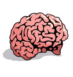human brain 003 vector image