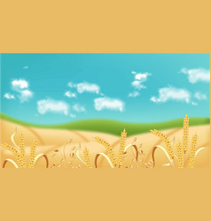 Oat fields realistic background summer vector