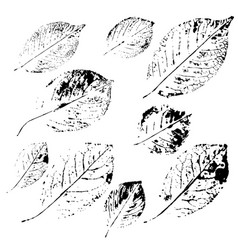 prints of different leaves set vector image