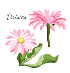 daisy flower with green leaves closeup realistic vector image vector image