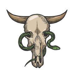 snake in cow skull sketch engraving vector image