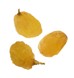 realistic raisins on white background vector image