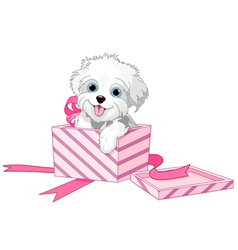 Dog in box vector image