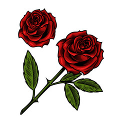 Single beautiful red rose vector