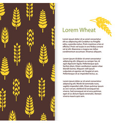 wheat ears bread banner template grains flyer vector image