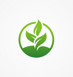 green leaf icon organic beauty vector image vector image