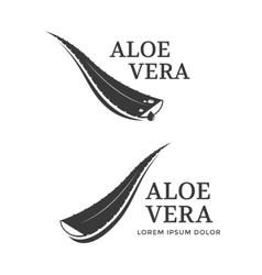 Aloe Vera icon vector