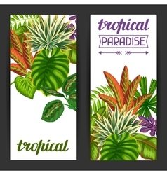 Banners with tropical plants and leaves Image for vector