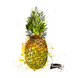 Beautiful colored watercolor pineapple vector