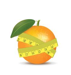 orange fruit with measurement tape vector image