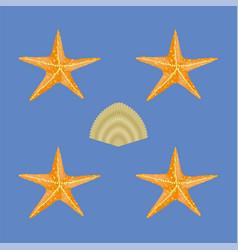 exotic seashell seamless pattern vector image