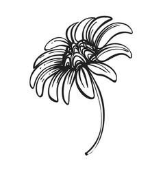 Bio chamomile icon simple style vector