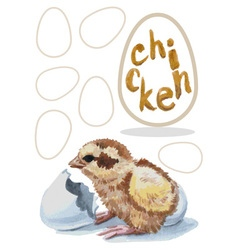 Chick hatched watercolor vector