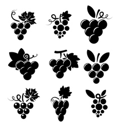 icons grapes vector image