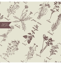 Medical herbs seamless pattern Hand drawn vector