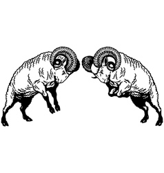Two fighting rams black white vector