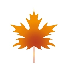 Leaf Maple vector image vector image